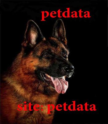 فروش سگ