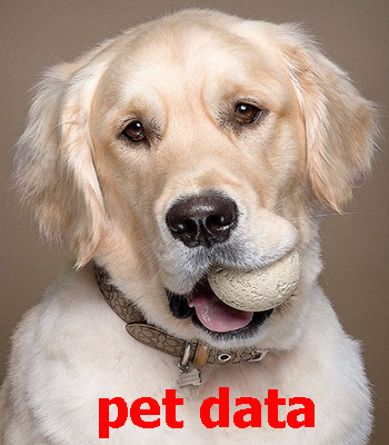 فروش سگ گلدن رتریور | قیمت سگ گلدن رتریور | خرید وفروش سگ گلدن رتریور | مرکز فروش سگ گلدن رتریور