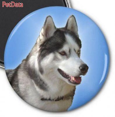 هاسکي سيبرين , سگ هاسکي