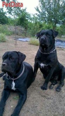 واردات خريد و فروش سگهاي اصيل
