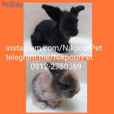 فروش انواع خرگوش و لوازم کامل شامل باکس ، خوراک ، بستر