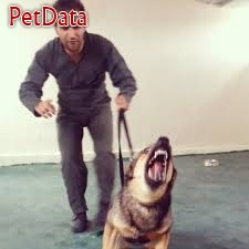 مربي تربيت سگ هاي کار - فرج زاده - 09351858702