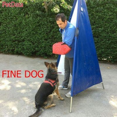 پيج اينستاگرام مربي تربيت سگ رضا کبود هن