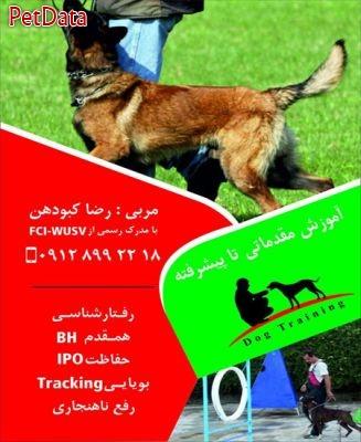 آموزش تربيت سگ رضا کبودهن - 09123711504