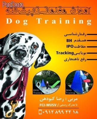 مربي تربيت سگهاي خانگي و سگهاي گارد رضا کبودهن