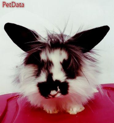 فروش ويژه خرگوش