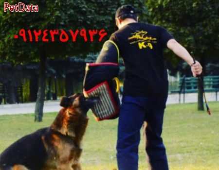 تربيت سگ عبازاده  -  09124357936