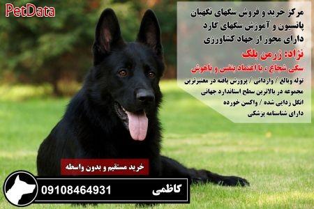 فروش سگ ژرمن شپرد اصيل 09108464931