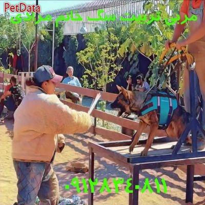مشاوره رايگان تربيت سگ  دوره آموزش به سگ