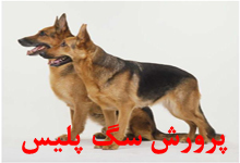 پرورش سگ پلیس