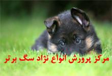 مرکز پرورش انواع نژاد سگ