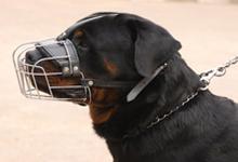 معرفی نژاد سگ روتوایلر
